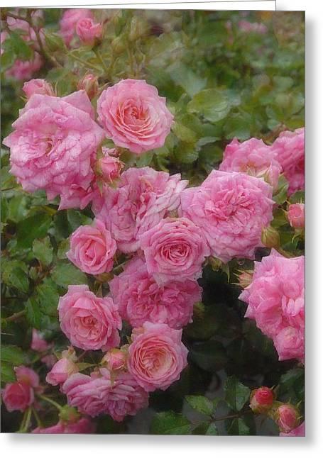 Roses Greeting Cards - Flowers 522 Greeting Card by Joyce StJames