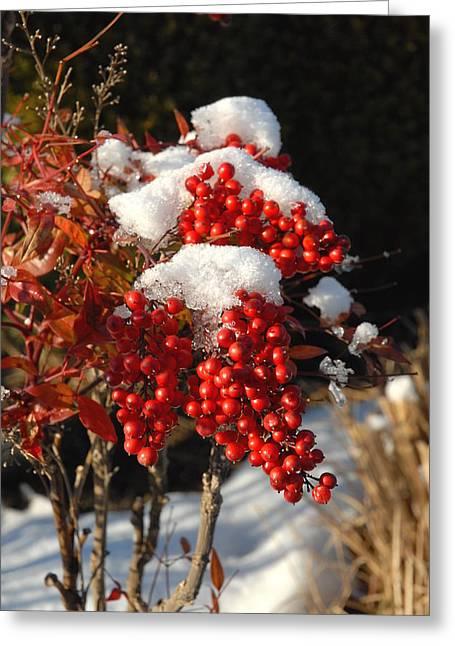 Berries Framed Prints Greeting Cards - Flowers 549 Greeting Card by Joyce StJames