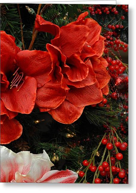 Bouquet Amaryllis Greeting Cards - Flowers 554 Greeting Card by Joyce StJames