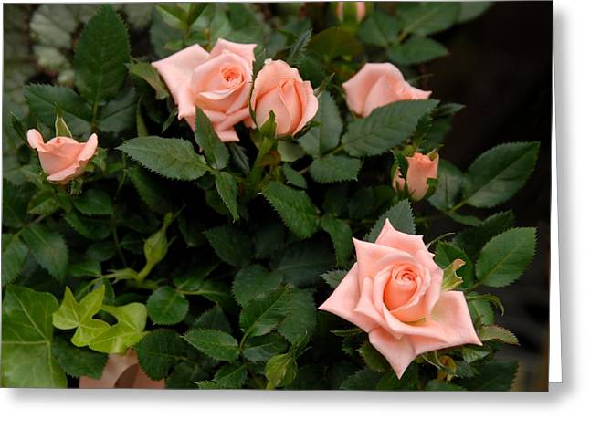 Photograph Of Peaches Greeting Cards - Flowers 569 Greeting Card by Joyce StJames