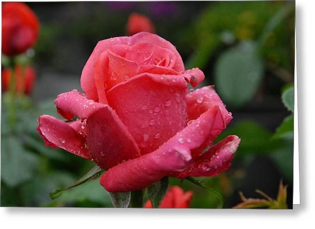 Roses Greeting Cards - Flowers 597 Greeting Card by Joyce StJames