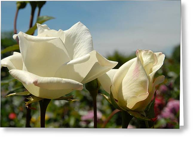 Roses Greeting Cards - Flowers 637 Greeting Card by Joyce StJames