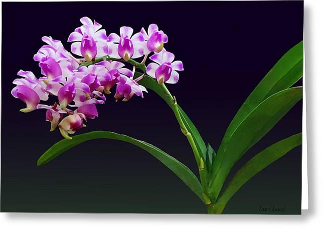 Gardening Greeting Cards - Flowers - Aerides Lawrenciae X Odorata Orchid Greeting Card by Susan Savad