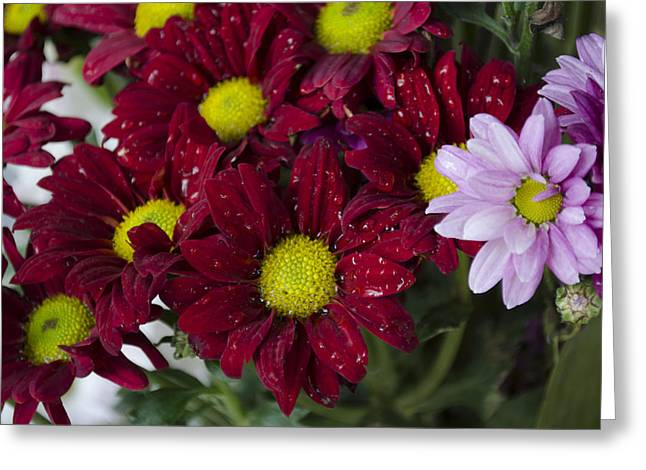 Flowers Greeting Card by Ahmed Tarek Shaffik
