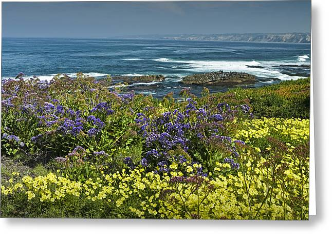 Pacific Ocean Prints Greeting Cards - Flowers along the shore at La Jolla  California No.0202 Greeting Card by Randall Nyhof