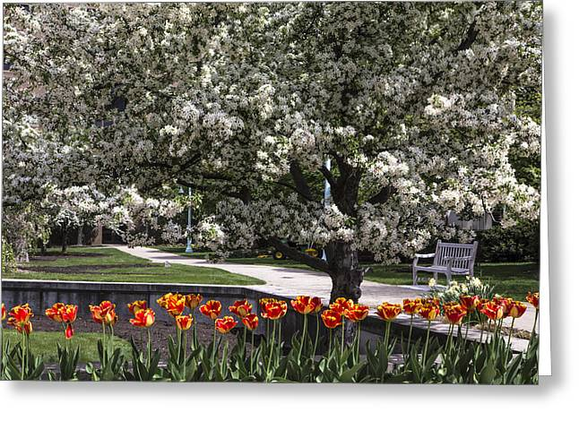 Flowers And Bench At Michigan State University  Greeting Card by John McGraw