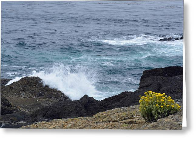 Point Lobos Reserve Greeting Cards - Flowers and Crashing Waves Greeting Card by Bruce Gourley