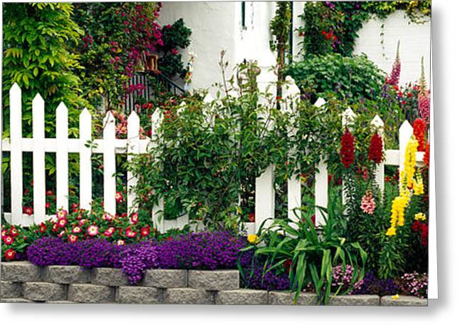 Creepers Greeting Cards - Flowers And Picket Fence In A Garden Greeting Card by Panoramic Images