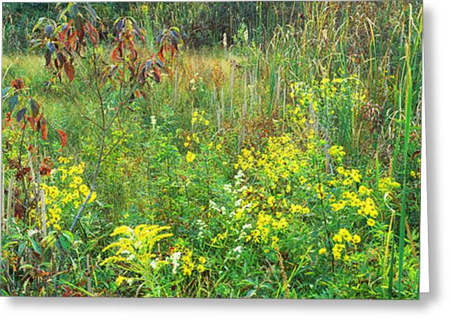 Nature Preserve Greeting Cards - Flowers And Plants, Springville Marsh Greeting Card by Panoramic Images