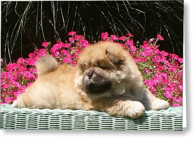 Recently Sold -  - Puppy Digital Art Greeting Cards - Flowers and Puppies Greeting Card by Tammy Tosh