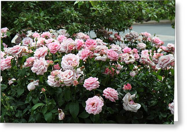 Flowers - Arlington National Cemetery - 01131 Greeting Card by DC Photographer