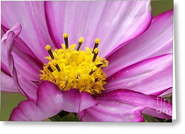 Eunice Miller Greeting Cards - Flowers For The Wall Greeting Card by Eunice Miller