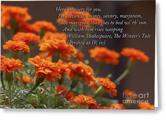 Beautiful Greeting Cards - Flowers For You Greeting Card by Janice Rae Pariza