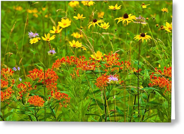 Paint Photograph Greeting Cards - Flowers Galore - Blue Ridge Parkway I Greeting Card by Dan Carmichael