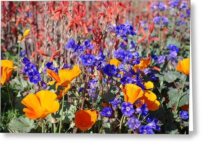 Flowers Gone Wild Greeting Card by David Rizzo