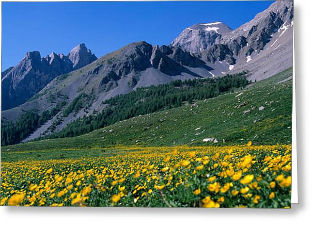 Snow Blossom Greeting Cards - Flowers Growing On A Field, French Greeting Card by Panoramic Images
