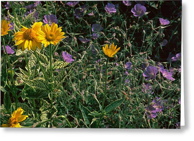 Botany Greeting Cards - Flowers In A Botanical Garden, Buffalo Greeting Card by Panoramic Images