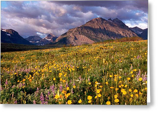 Overcast Day Greeting Cards - Flowers In A Field, Glacier National Greeting Card by Panoramic Images