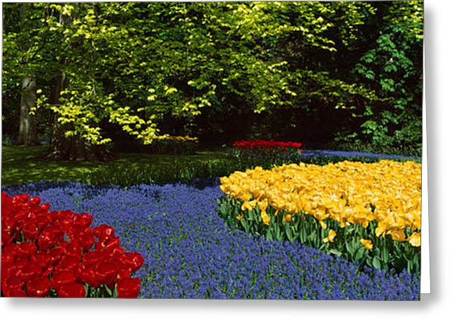 Keukenhof Gardens Greeting Cards - Flowers In A Garden, Keukenhof Gardens Greeting Card by Panoramic Images