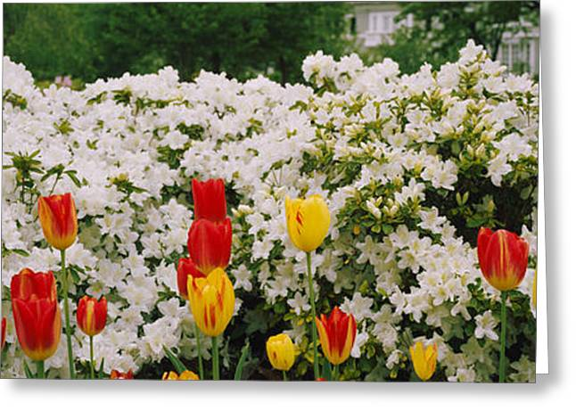Garden Scene Photographs Greeting Cards - Flowers In A Garden, Sherwood Gardens Greeting Card by Panoramic Images