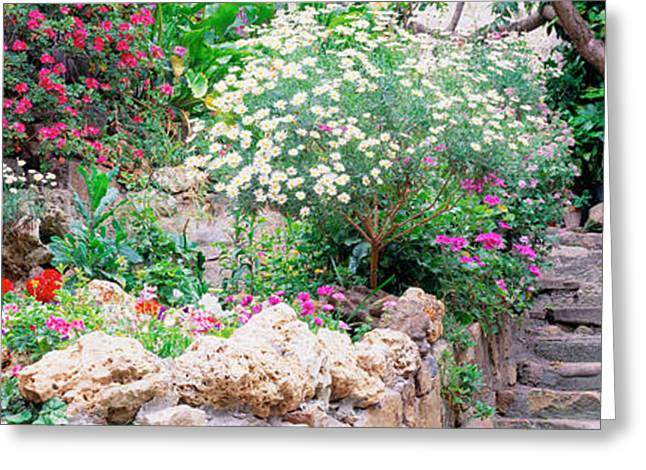 Stepping Stones Greeting Cards - Flowers In A Garden, Tossa De Mar, Old Greeting Card by Panoramic Images
