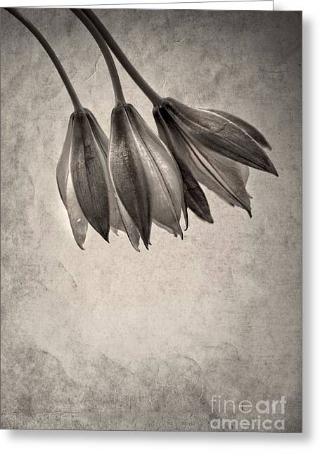 Flower Still Life Greeting Cards - Flowers In Black And White Greeting Card by HD Connelly