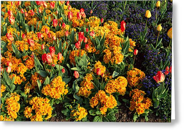 Flowers In Hyde Park, City Greeting Card by Panoramic Images