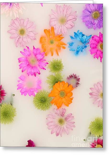 Rose Petals Greeting Cards - Flowers in Milk Greeting Card by Jt PhotoDesign