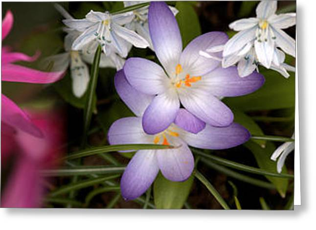 Flowers In Pastel Colors Greeting Card by Panoramic Images