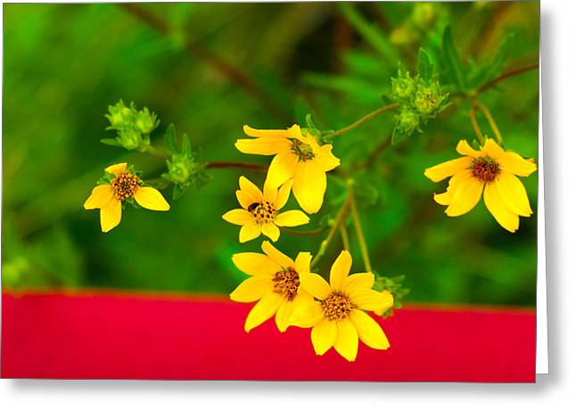 Close Up Greeting Cards - Flowers in Red Fence Greeting Card by Darryl Dalton