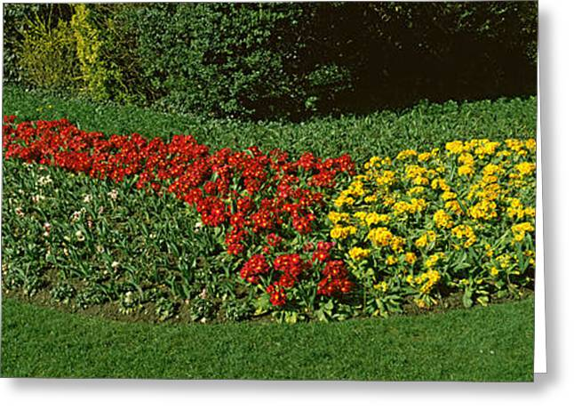 Flowers In St. Jamess Park, City Greeting Card by Panoramic Images