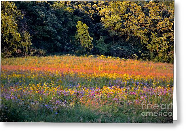 The Hills Greeting Cards - Flowers in the Meadow Greeting Card by Deb Halloran
