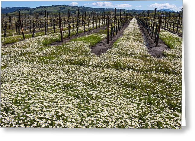 Sonoma Greeting Cards - Flowers In The Vineyards Greeting Card by Garry Gay