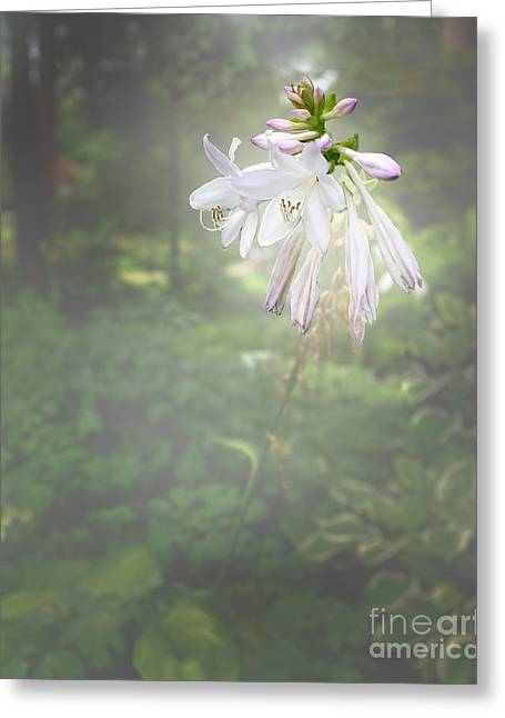 Vase Framed Prints Greeting Cards - Flowers in the Wild 8057.02 Greeting Card by M K  Miller