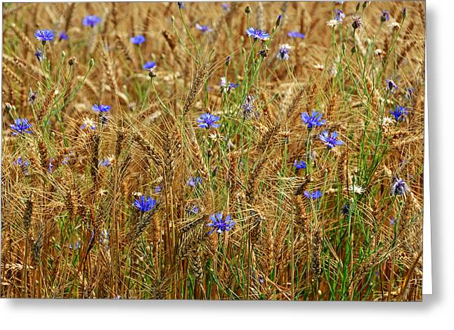 Purchase Greeting Cards - Flowers in Wheat Field Greeting Card by Steven  Michael