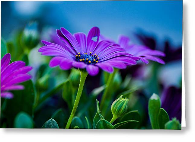 Kjg Greeting Cards - Flowers Greeting Card by Mirra Photography