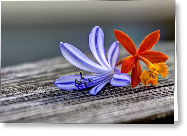 Ground Greeting Cards - Flowers of Blue and Orange Greeting Card by Marvin Spates