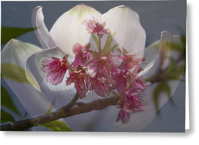 China Beach Greeting Cards - Flowers of the Orient Greeting Card by Debra and Dave Vanderlaan