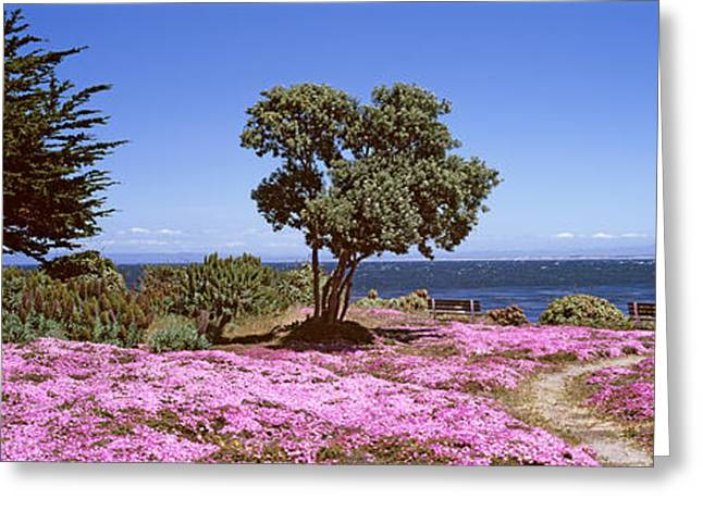 California Ocean Photography Greeting Cards - Flowers On The Beach, Pacific Grove Greeting Card by Panoramic Images