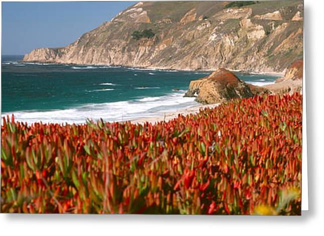 Big Sur California Photographs Greeting Cards - Flowers On The Coast, Big Sur Greeting Card by Panoramic Images