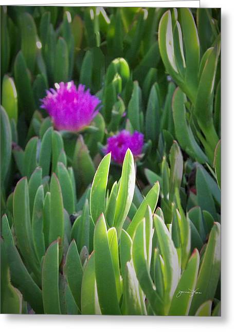 Flowers Along The California Coast Greeting Cards - Flowers on the Way to the Beach Greeting Card by Jan Moore