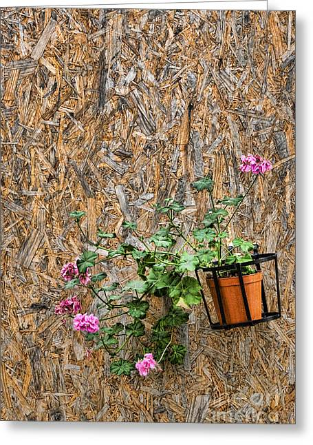 Sicily Greeting Cards - Flowers on wall - Taromina Greeting Card by David Smith