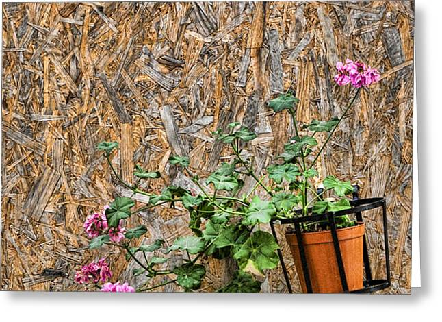Flowers on wall - Taromina Greeting Card by David Smith