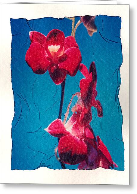 Transfer Greeting Cards - Flowers On Watercolor Paper Greeting Card by Corey Hochachka