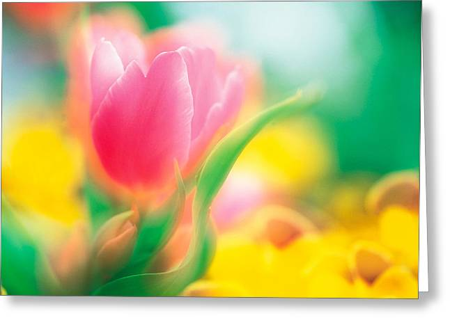 Flower Blossom Greeting Cards - Flowers Greeting Card by Panoramic Images
