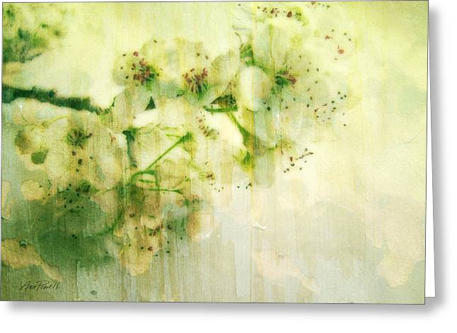 Pear Mixed Media Greeting Cards - Flowers Pear Blossoms Springtime Joy Greeting Card by Ann Powell