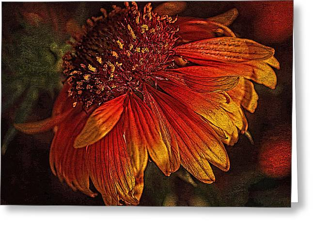 Sunlight On Flowers Greeting Cards - Flowers - Red and Yellow Greeting Card by HH Photography
