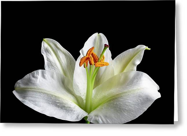 Flower's Reproductive Structures Greeting Card by Science Photo Library