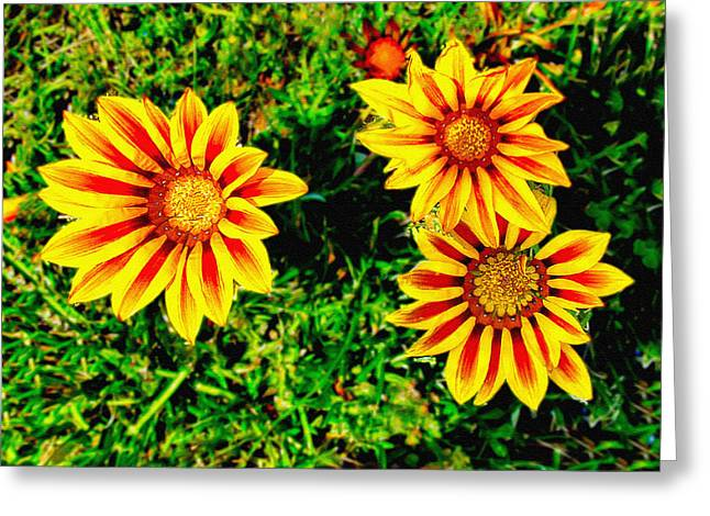 Flowers Thousand Trails  Greeting Card by Bob and Nadine Johnston