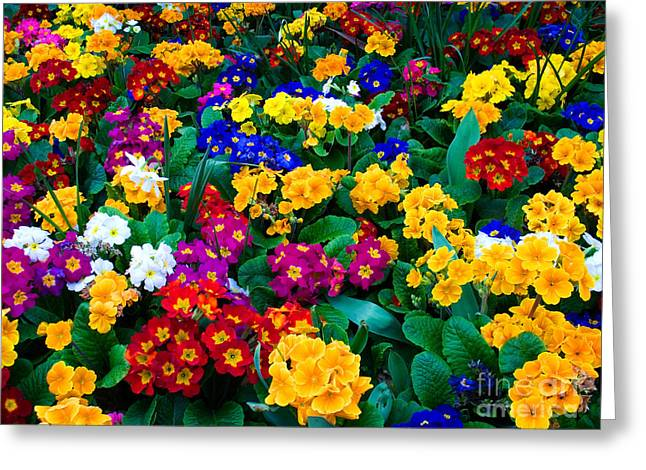 Assorted Greeting Cards - Flowers Greeting Card by Tim Holt